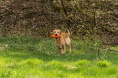Hunde Frank - 027 Kopie