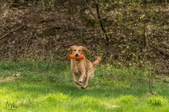 Hunde Frank - 028 Kopie